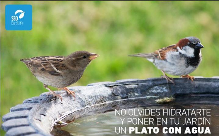 Es necesario dar de beber a los pájaros, ellos también están en riesgo